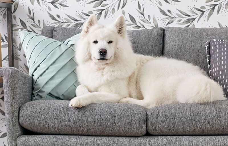 Best Couch Dogs 2020