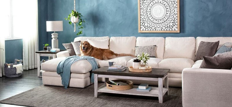 Things to consider when buying dog couches
