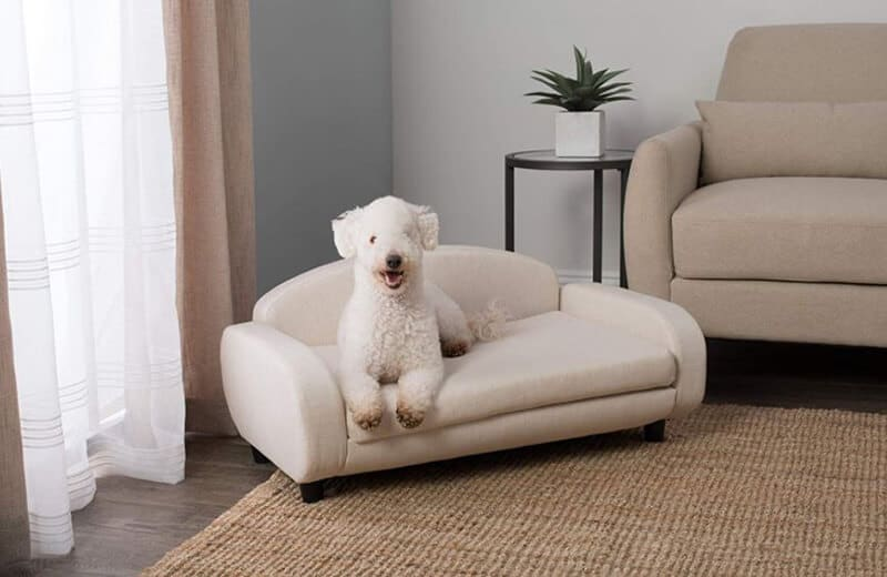 Top Rated 11 Best Couches For Dogs Brands
