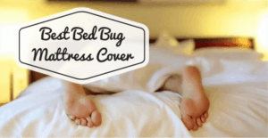 Best Bed Bug Mattress Cover 2021