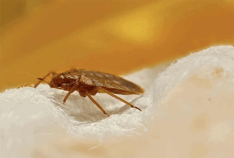 What to consider before purchasing the best mattress protectors for bed bugs