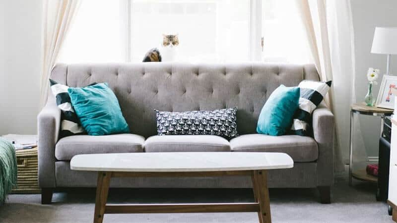 How To Get Rid Of Bed Bug On A Couch