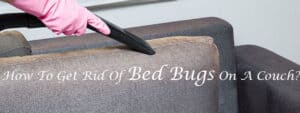 How To Get Rid Of Bed Bugs On A Couch
