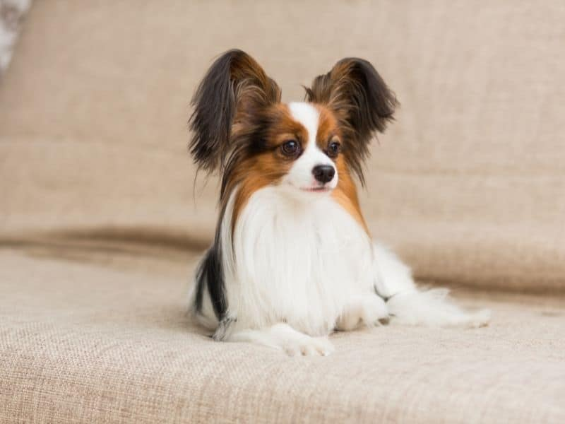 How To Keep Dog Off Couch (1)