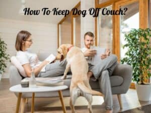 How To Keep Dog Off Couch